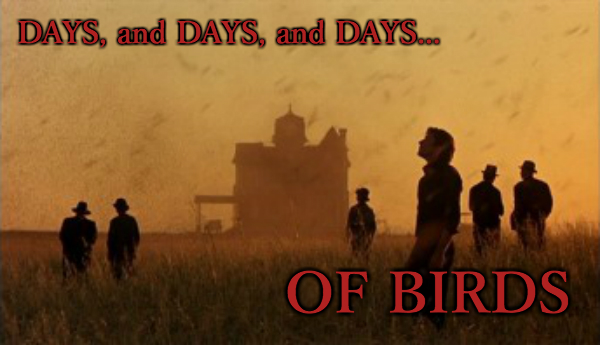 Days of Birds