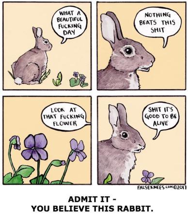 False Knees - Rabbit Comic (with Caption).jpg